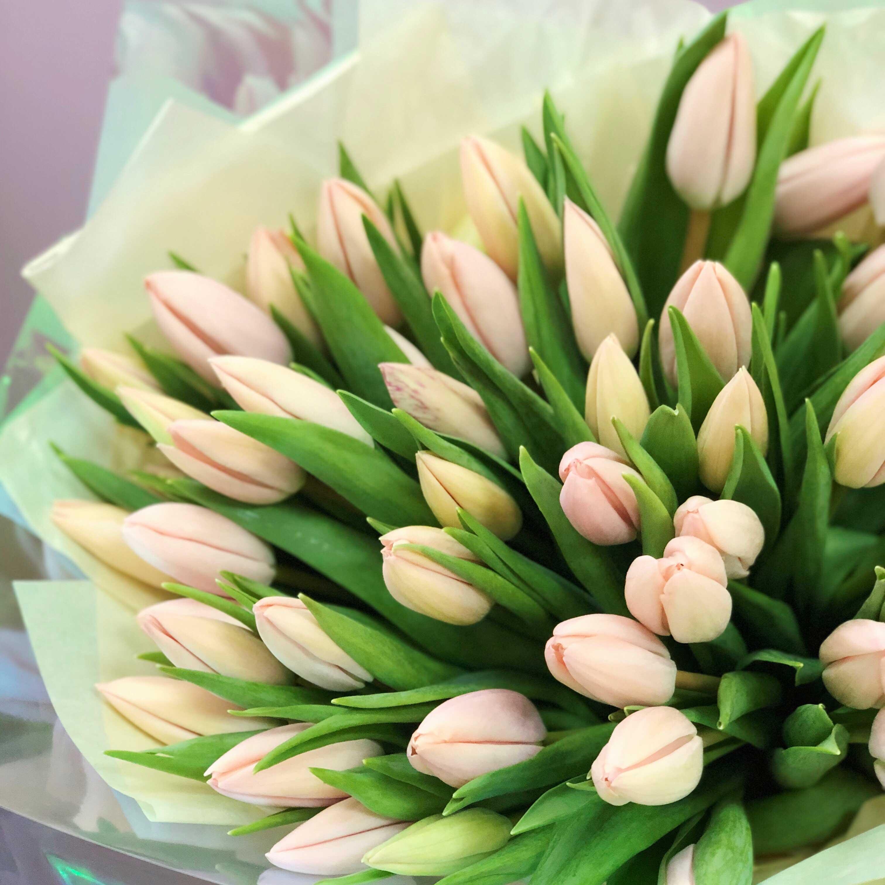 Букет тюльпанов №0955