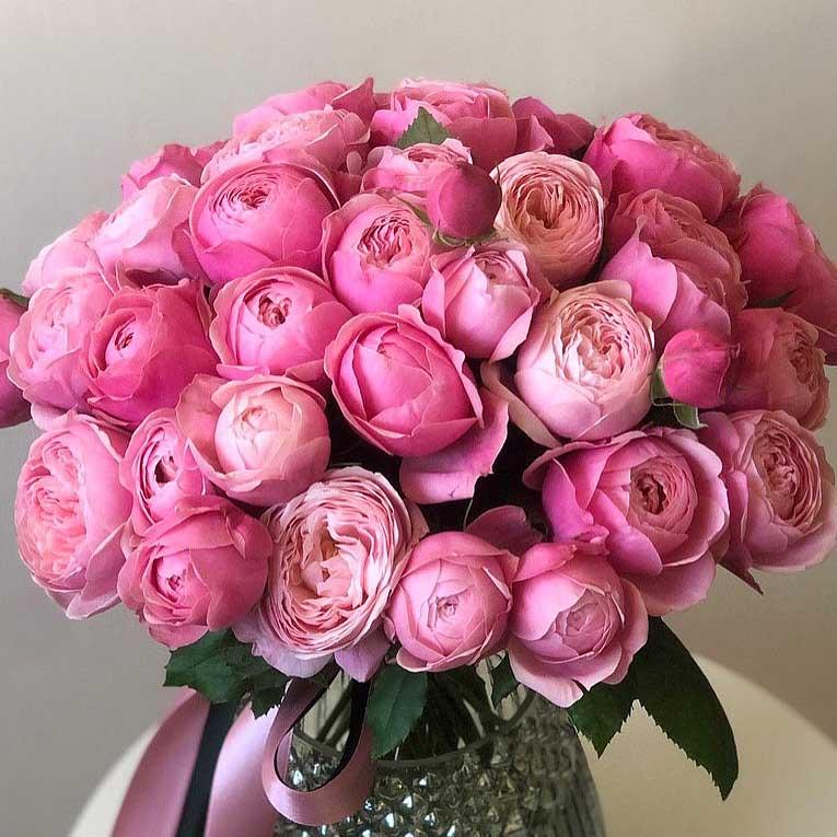 Пионовидные розы Сильва Пинк №0888