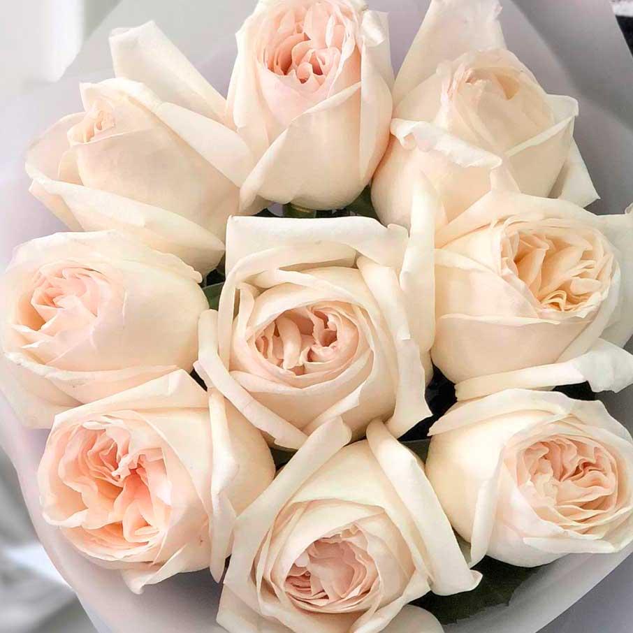 Ароматные розы Вайт Охара №0361