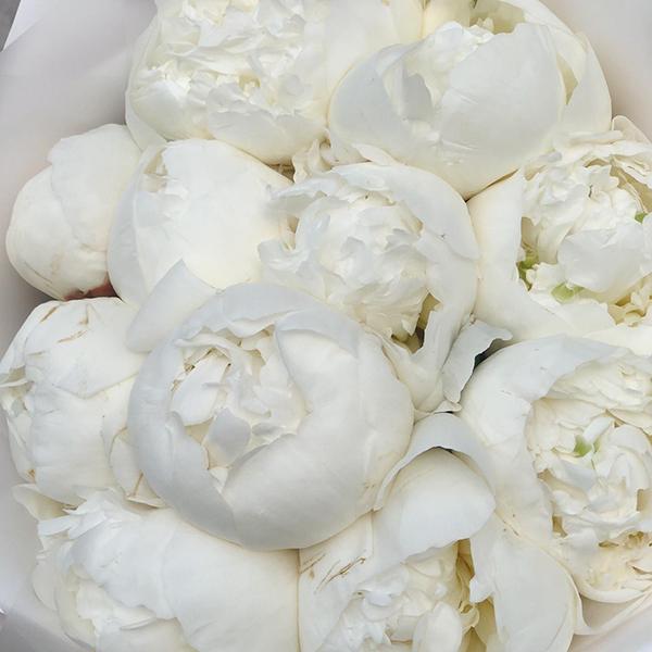 Букет ароматных белых пионов Дюшес №0996