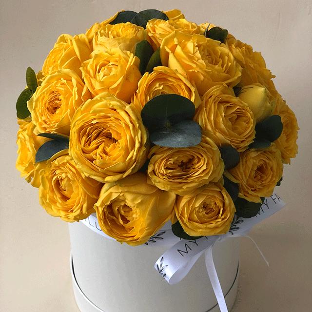 Розы Голден Трендсеттер  в коробке S №0422