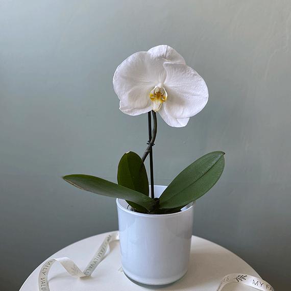 Горшечные растения №0194