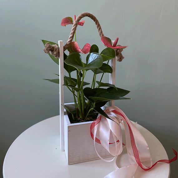 Горшечные растения №0193