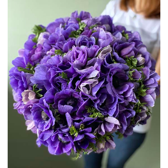 Анемоны фиолетовые №0247